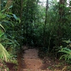 Heliconias Lodge Forest Trail.jpg